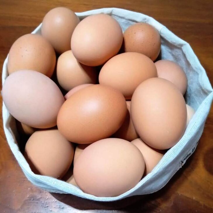 Huevos de Campo ECOLÓGICOS – 6u